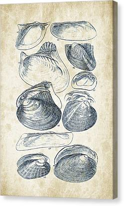 Mollusks - 1842 - 08 Canvas Print by Aged Pixel