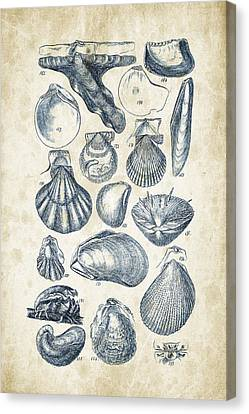 Mollusks - 1842 - 10 Canvas Print by Aged Pixel