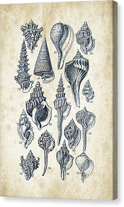 Mollusks - 1842 - 17 Canvas Print by Aged Pixel