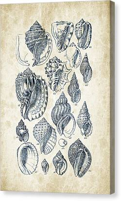 Mollusks - 1842 - 19 Canvas Print by Aged Pixel