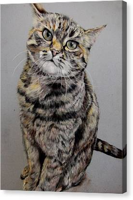 Molly Canvas Print by Tanya Patey