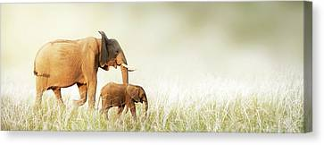Mom And Baby Elephant Walking Through Tall Grass Canvas Print