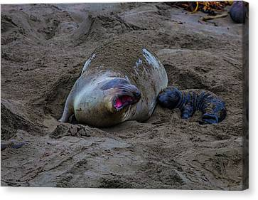 Bonding Canvas Print - Mom And Pup Bonding by Garry Gay