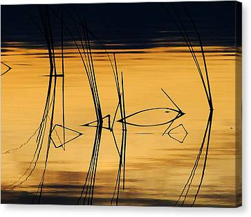 Canvas Print featuring the photograph Momentary Reflection by Blair Wainman