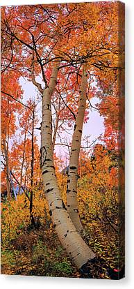 Moments Of Fall Canvas Print by Chad Dutson