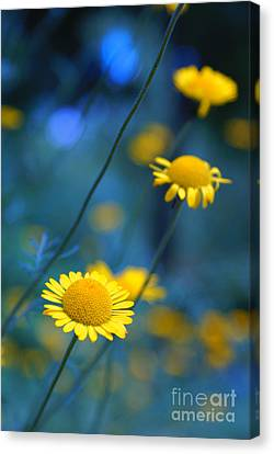 Momentum 04a Canvas Print by Variance Collections