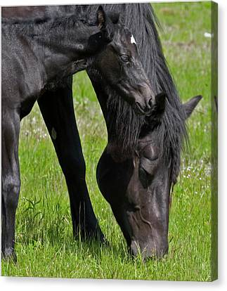 Momma And Baby Canvas Print