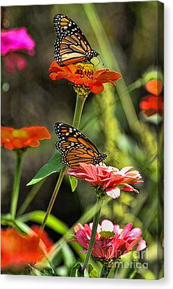 Monarch 8 Canvas Print