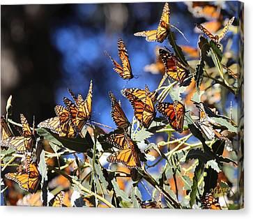 Monarch Active Cluster Canvas Print