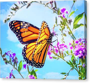 Monarch Butterfly And Blue Skies Canvas Print by Mark Andrew Thomas