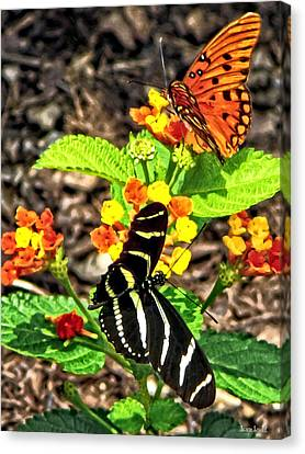Monarch Butterfly And Zebra Butterfly Canvas Print by Susan Savad