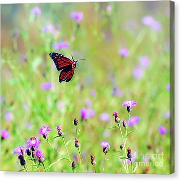 Canvas Print featuring the photograph Monarch Butterfly In Flight Over The Wildflowers by Kerri Farley