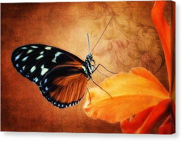 Monarch Butterfly On An Orchid Petal Canvas Print by Tom Mc Nemar