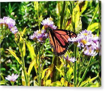Monarch Butterfly On Purple Wildflower Canvas Print by Susan Savad