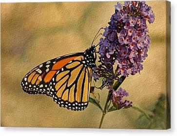 Monarch Butterfly Canvas Print by Sandy Keeton