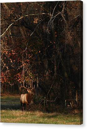 Canvas Print featuring the photograph Monarch Joins The Rut by Michael Dougherty