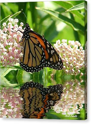 Monarch Lunch Canvas Print by Rick Friedle