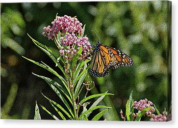 Canvas Print featuring the photograph Monarch On Milkweed by Sandy Keeton