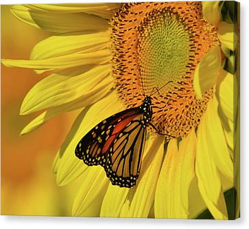 Canvas Print featuring the photograph Monarch On Sunflower by Ann Bridges