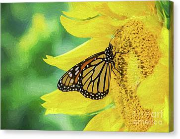 Monarch On Sunflower Canvas Print
