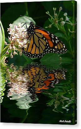 Monarch Reflection Canvas Print by Rick Friedle