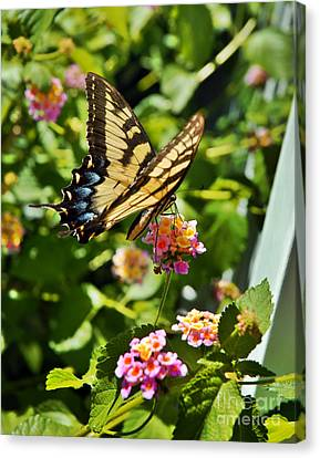 Monarch Summer Canvas Print