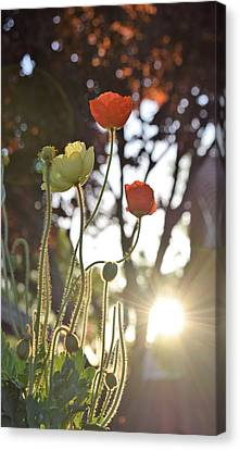Monday Morning Sunrise Canvas Print