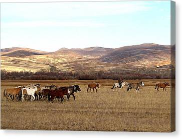 Mongolian Horses And Rider Canvas Print by Diane Height