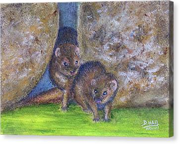 Mongoose #511 Canvas Print by Donald k Hall