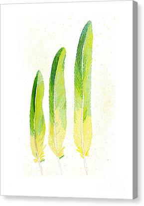 Monk Parakeet Feather Canvas Print