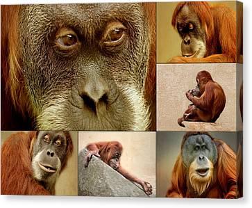 Monkey Collage Canvas Print