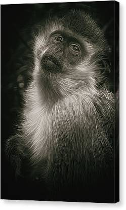 Monkey Portrait Canvas Print