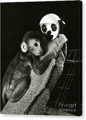 Monkey Research Canvas Print by Photo Researchers, Inc.