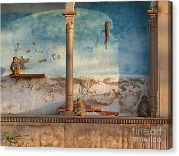 Canvas Print featuring the photograph Monkeys At Sunset by Jean luc Comperat