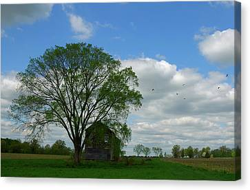 Canvas Print featuring the photograph Monmouth Battlefield by Steven Richman