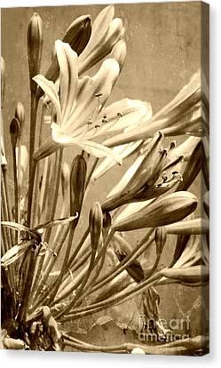 Floral Canvas Print - Monochrome Agapanthus by Clare Bevan