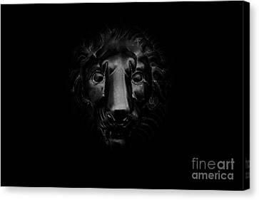 Monochrome Lion Canvas Print by Floyd Menezes