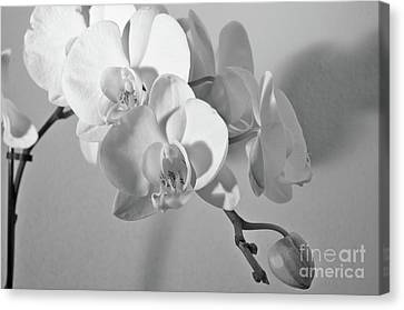 Monochrome Orchids Canvas Print by Angelo DeVal