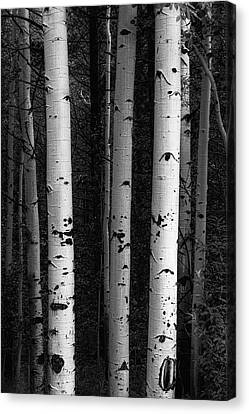 Canvas Print featuring the photograph Monochrome Wilderness Wonders by James BO Insogna
