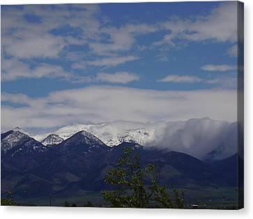 Montana June Canvas Print by Yvette Pichette