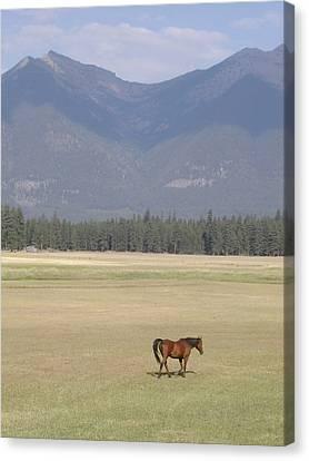 Montana Ranch Canvas Print by Lisa Patti Konkol