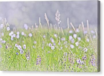 Canvas Print featuring the photograph Montana Wildflowers Lavender by Jennie Marie Schell
