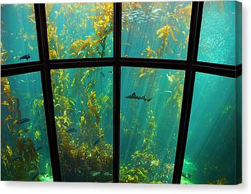 Monterey Kelp Forest Canvas Print by Brian Knott - Forget Me Knott Photography