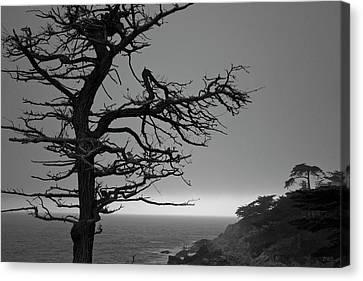 Canvas Print featuring the photograph Monterey Penninsula I Bw by David Gordon