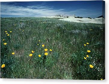 Montgomery Potrero - Kodachrome 25 Canvas Print