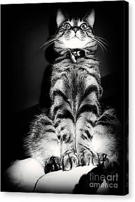 Monty Our Precious Cat Canvas Print by Jolanta Anna Karolska