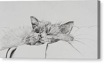 Monty  Sleepy Boy Canvas Print by Vincent Alexander Booth
