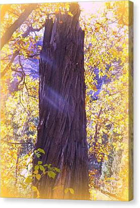 Monument To Old Man Cottonwood Canvas Print by Annie Gibbons