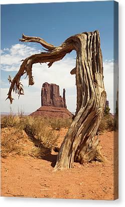 Monument Valley Desert Tree Canvas Print