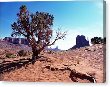Monument Valley Tree 1 Canvas Print